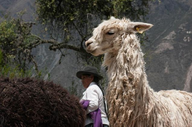 Registro de viagem ao Peru, feito por João Vicente Ribas.